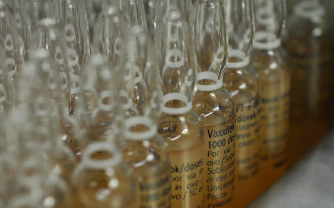 Vaxxitek, da Boehringer Ingelheim, é a vacina aviária mais vendida do mundo