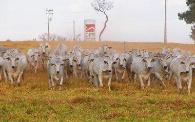 Agro-pecuária CFM é a maior vendedora de reprodutores zebuínos avaliados do Brasil pelo terceiro ano consecutivo