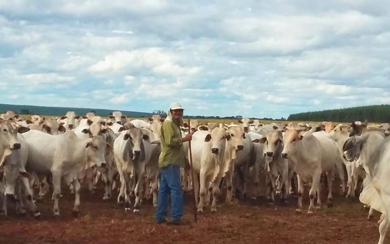 Rodolfo Endres, associado da ASSOCON, tem expectativas positivas para a pecuária no segundo semestre