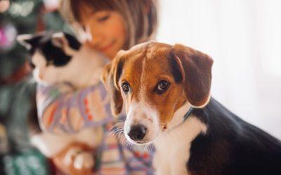 Pulgas e carrapatos: as ameaças que eles trazem à saúde de cães e gatos e como evitar