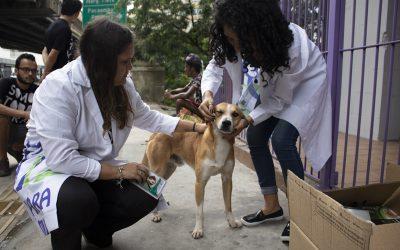 Boehringer Ingelheim Saúde Animal e Ampara Animal unem-se para ajudar cães de rua em São Paulo