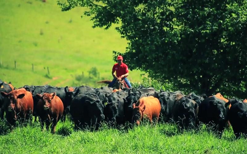 Casa Branca Agropastoril realiza Leilão de Outono das raças Angus, Brahman e Simental
