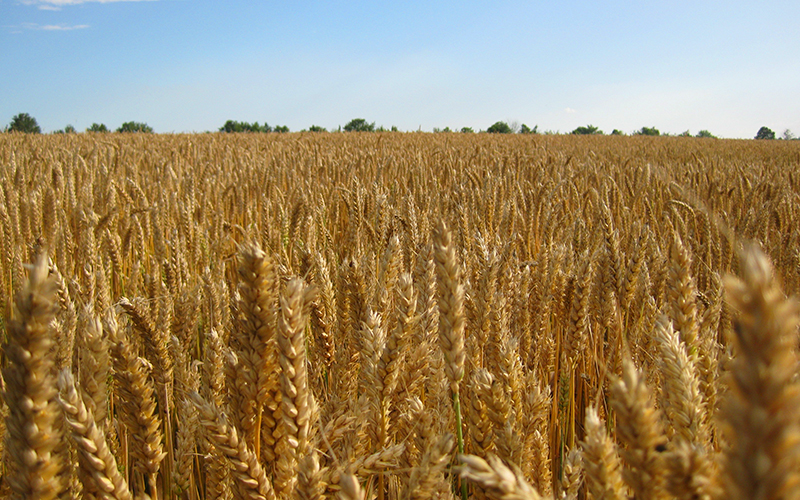 Maior produtividade dos grãos é o foco da Brandt do Brasil no dia de campo da Copercampos, em Campos Novos (SC)