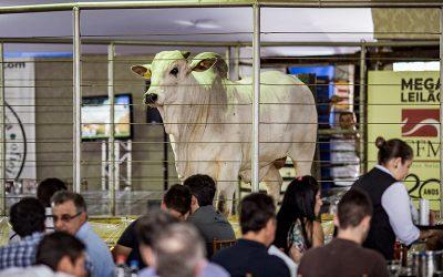 53 pecuaristas compraram touros Nelore CFM pela primeira vez em 2018