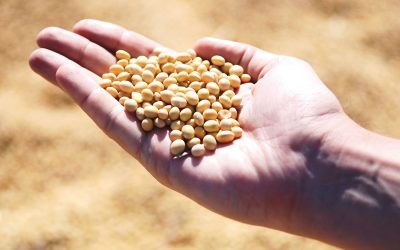 UPL foca em culturas de inverno no CPAgro da Copacol, em Cafelândia (PR)