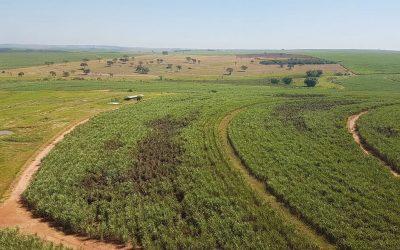 UPL leva ao Herbishow soluções contra plantas daninhas e diversas ferramentas para canaviais