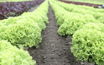 UPL destaca a Saúde Vegetal na 26ª Hortitec, em Holambra (SP)