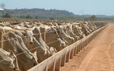 Suplementação nutricional injetável prepara melhor os bovinos para suportar o confinamento