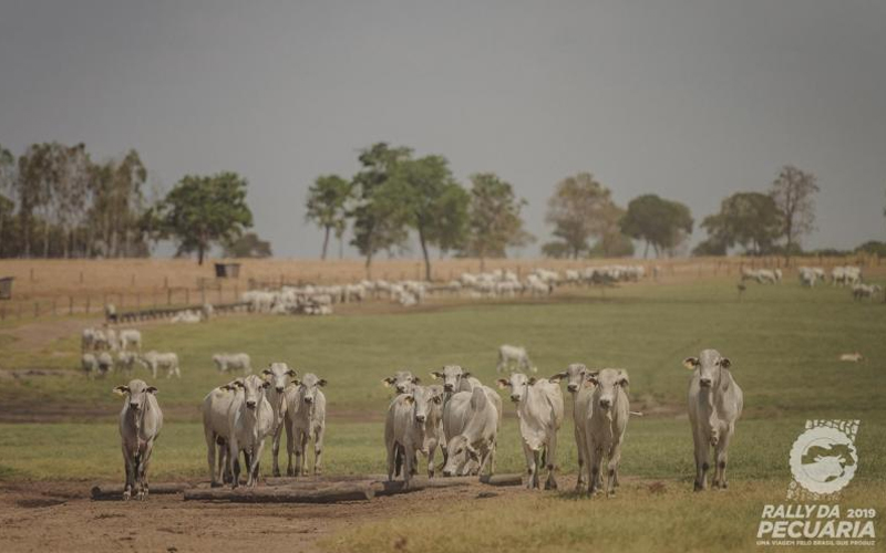 Confinamento é característica marcante da pecuária de Goiás, destaca Trouw Nutrition, no Rally da Pecuária