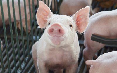 Nutrição animal e boas práticas de manejo contribuem para a redução do uso de antimicrobianos, destaca Trouw Nutrition no Congresso da ABRAVES