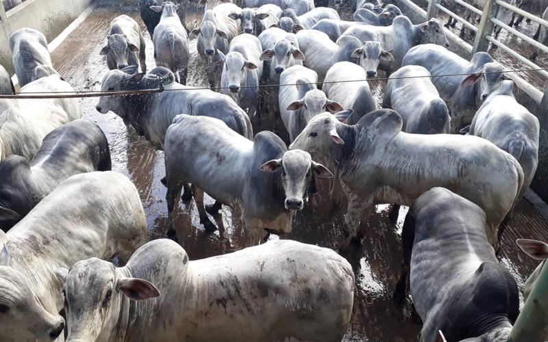 Circuito Nelore de Qualidade auxilia desenvolvimento da pecuária em Itapetinga (BA)