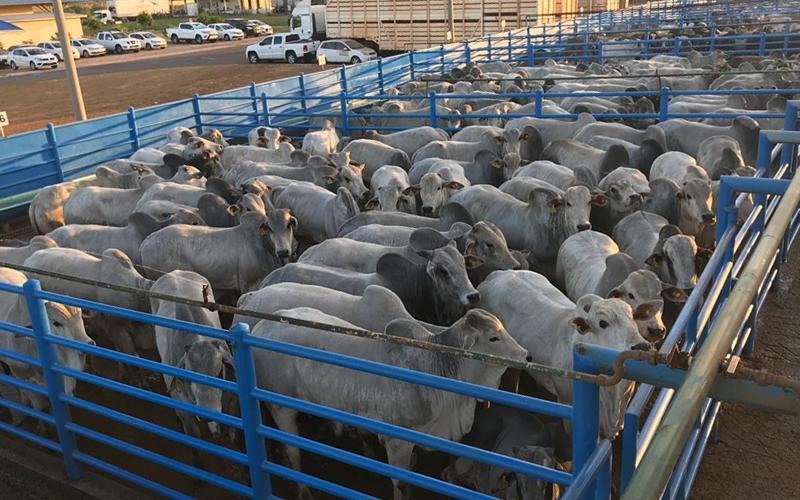 Circuito Nelore de Qualidade chega a 200 etapas e contribui para o desenvolvimento da pecuária no Brasil