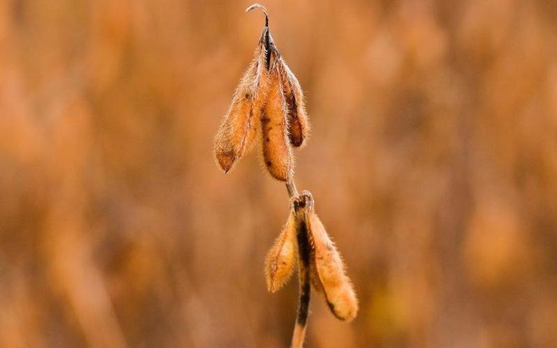 Brandt do Brasil apresenta tecnologias nutricionais para a soja no Encontro Nacional Top Farmers, em Campinas (SP)