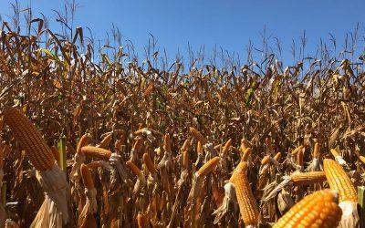 Soluções de alta performance para a agricultura são destaques da Brandt em feira de Reserva (PR)