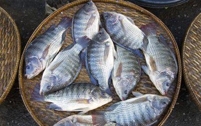 Definição dos aditivos alimentares para pescado aumentará oferta de produtos derivados, informa Peixe BR