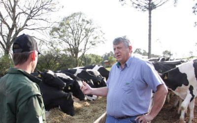 Respeitar o período seco entre lactações gera renda maior, indica veterinário
