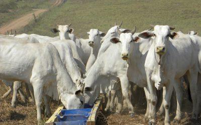 Confinamento expresso: econômico e útil na estratégia da fazenda