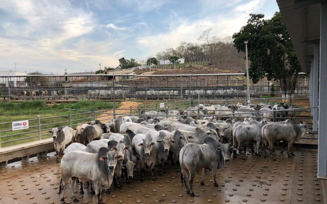 """""""Brasil será o maior produtor de carne bovina em cinco anos"""", afirma presidente da Associação dos Criadores de Nelore do Brasil"""