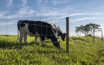 Cercamento é importante para evitar problemas com lotação de animais no pasto, aponta analista da Belgo Bekaert