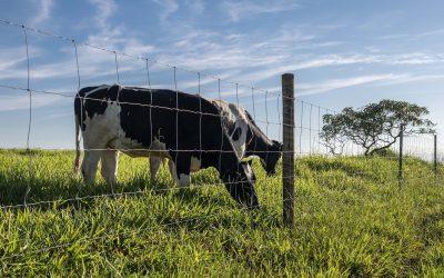 Tela pronta tem durabilidade e eficiência para a lucratividade da pecuária no Norte do Brasil, destaca analista de mercado da Belgo Bekaert