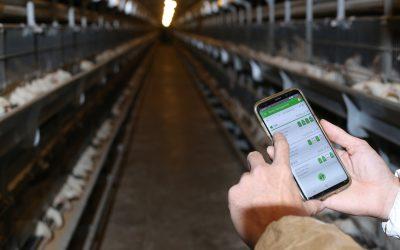 Revolução digital moderniza o processo de vacinação de aves
