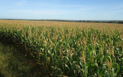 Biomin desenvolve ferramenta de predição de micotoxinas que permite antecipar perfil de contaminação em milho e trigo