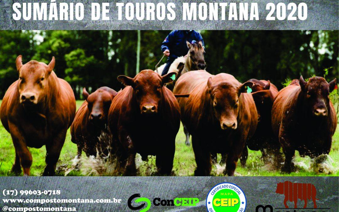 Sumário de Touros Montana 2020 contém dados de 179 reprodutores