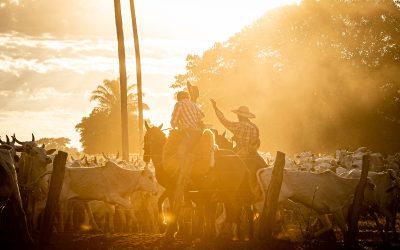 Pecuaristas do Pantanal recebem conhecimento técnico da Trouw Nutrition em parceria com o WWF- Brasil para produzir mais, sem abertura de novas áreas