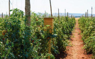 GenesisGroup e PROMIP constroem aliança para desenvolver a plataforma MIP EXPERIENCE, projeto que une produção e varejo para validação das boas práticas agrícolas, segurança e qualidade dos alimentos