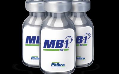 Vacina MB-1, da Phibro, supera 55 milhões de aves imunizadas contra Doença de Gumboro no Brasil
