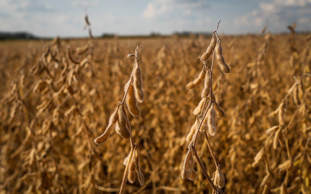 BRANDT do Brasil leva tecnologias para a soja aos Dias de Campo da Agrotécnica Buriti no estado de Goiá