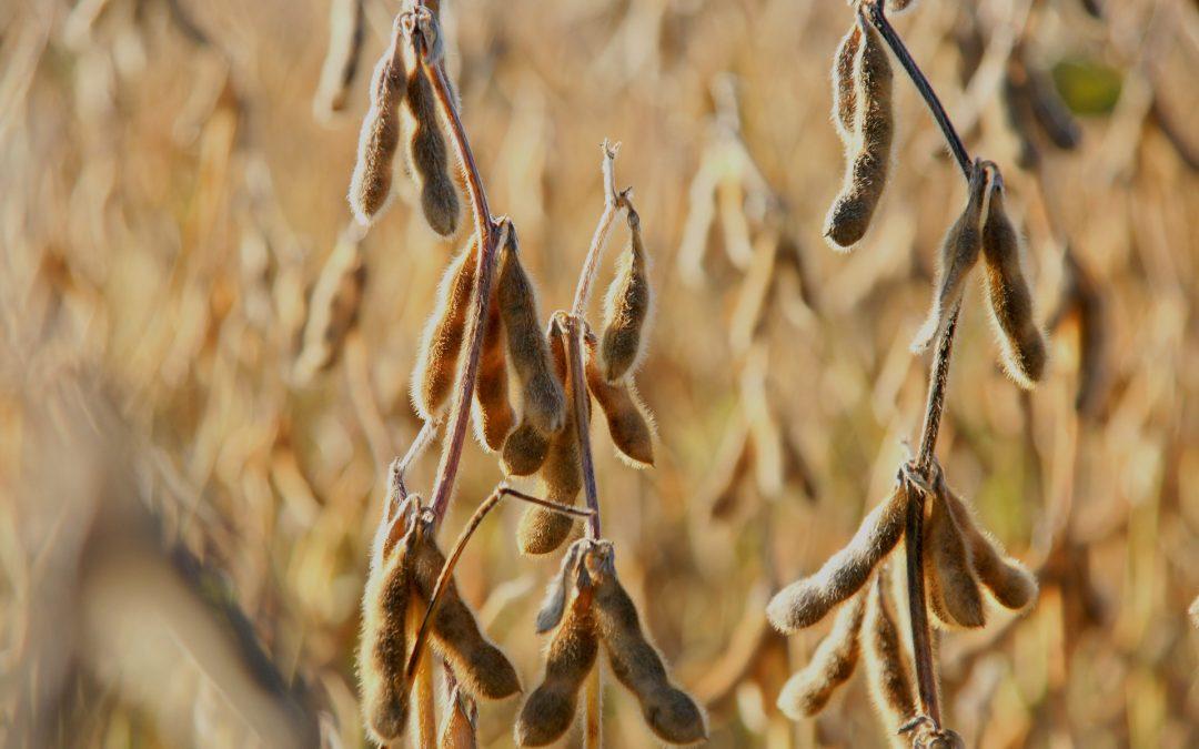BRANDT do Brasil leva tecnologias para soja ao Dia de Campo da Opção Agronegócios, em Uberlândia (MG)