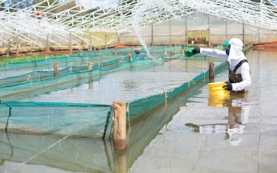 Produção de peixes nativos é 3,2% menor em 2020, recuando para 278.671 t