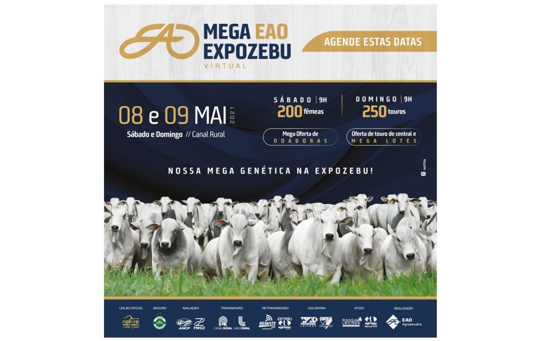 EAO Agropecuária promove leilão em duas etapas com grande oferta de animais Nelore