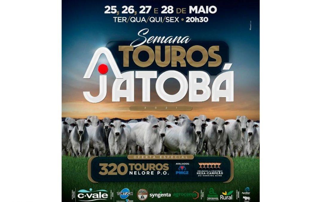 Leilão Virtual Touros Jatobá terá 4 etapas com oferta de animais avaliados