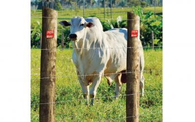 Arames com tripla camada de zinco proporcionam maior segurança para a propriedade rural, aponta especialista