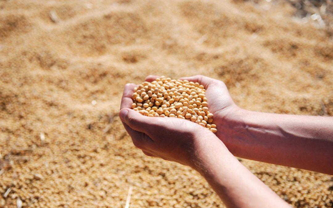 Alta dos grãos leva avicultores e suinocultores a buscar alternativas para reduzir custo de produção. Estratégia requer cuidado