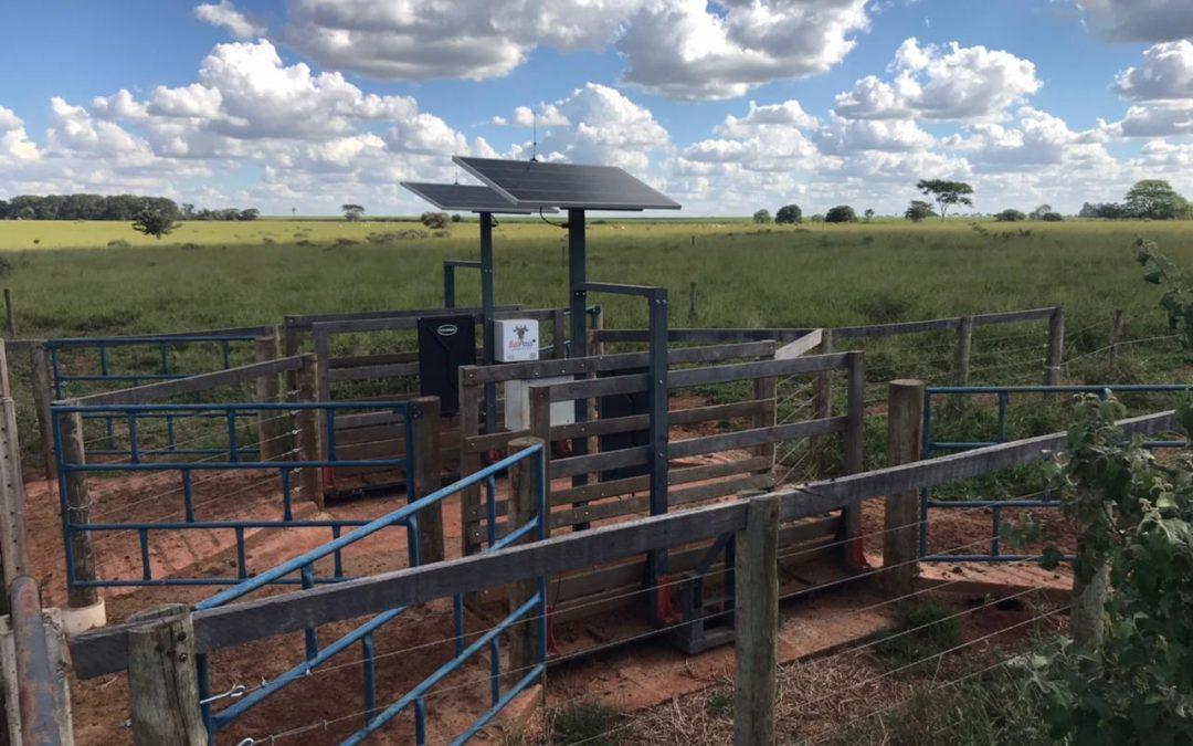 COIMMA e APTA Regional de Colina firmam parceria para ampliar estudos sobre o sistema de cria na pecuária de corte