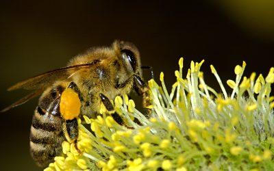 As abelhas e o agronegócio