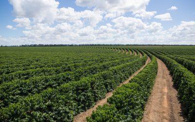 Treinamento do Sindiveg sobre defensivos agrícolas já emitiu 8,4 mil certificados