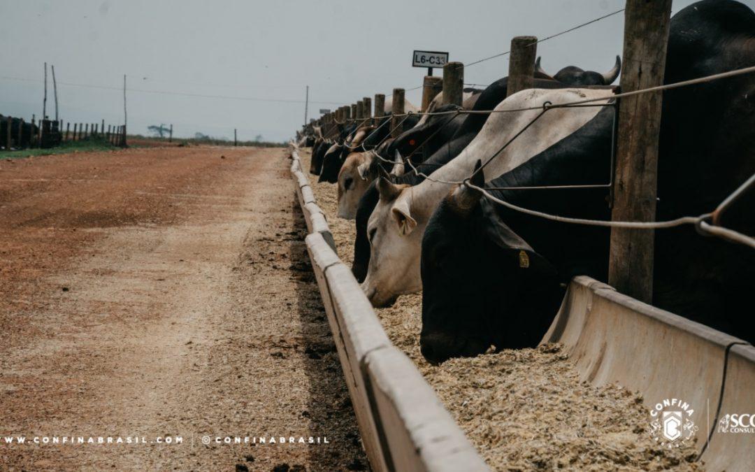 Com apoio da UPL, Confina Brasil inicia expedição para mapear 2 milhões de bovinos confinados