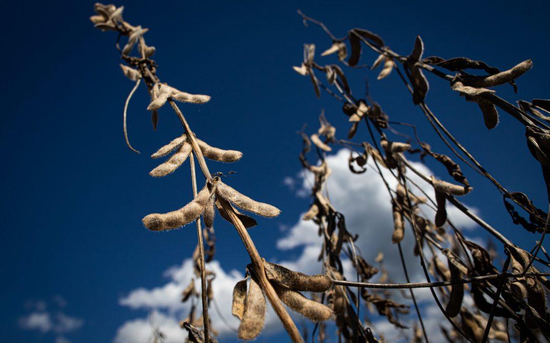 Ferrugem asiática pode causar perda de até 120 milhões de toneladas de soja no Brasil