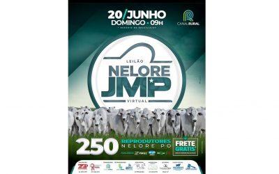 Leilão Nelore JMP tem grande oferta de reprodutores avaliados