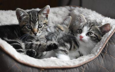 Nutrição adequada pode ser forte aliada na saúde e bem-estar dos felinos