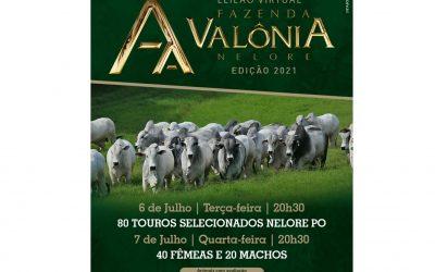Com leilão em duas etapas, Fazenda Valônia oferta machos e fêmeas Nelore avaliados