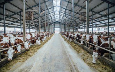 Incorporadas ao concreto, fibras de aço Dramix® reduzem custos dos produtores rurais e contribuem para maior segurança das fazendas