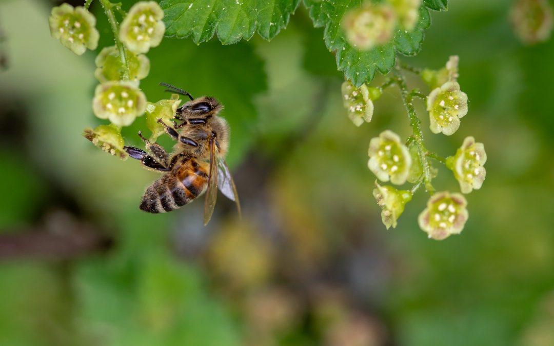 Colmeia Viva, do Sindiveg, mantém assistência técnica gratuita a agricultores e apicultores