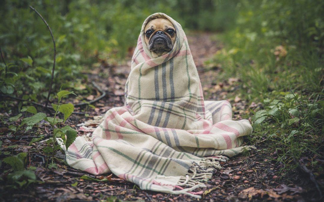 Frentes frias podem aumentar e ter impacto negativo nas dores articulares de cães