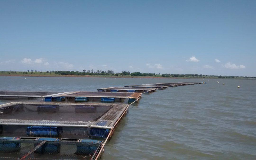 Análise e rígido acompanhamento de dados ajudam gestão sanitária adequada na piscicultura, aponta especialista