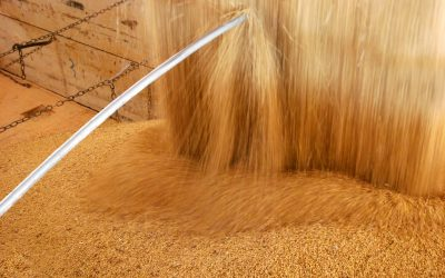 Aumento do preço das commodities agrícolas e o risco de micotoxinas na suinocultura
